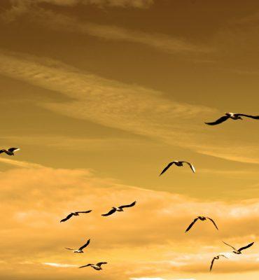 birds-84665